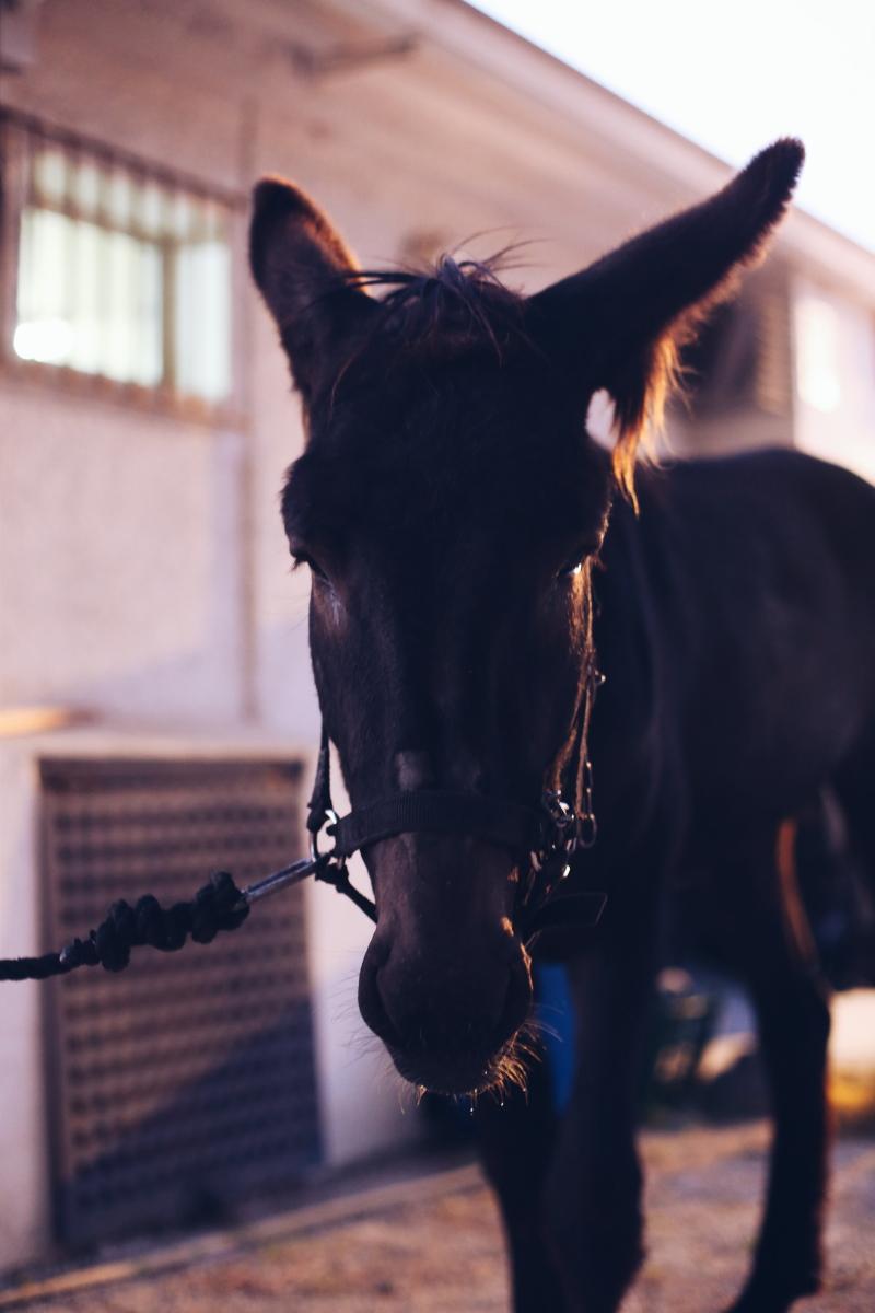 foto-caballo