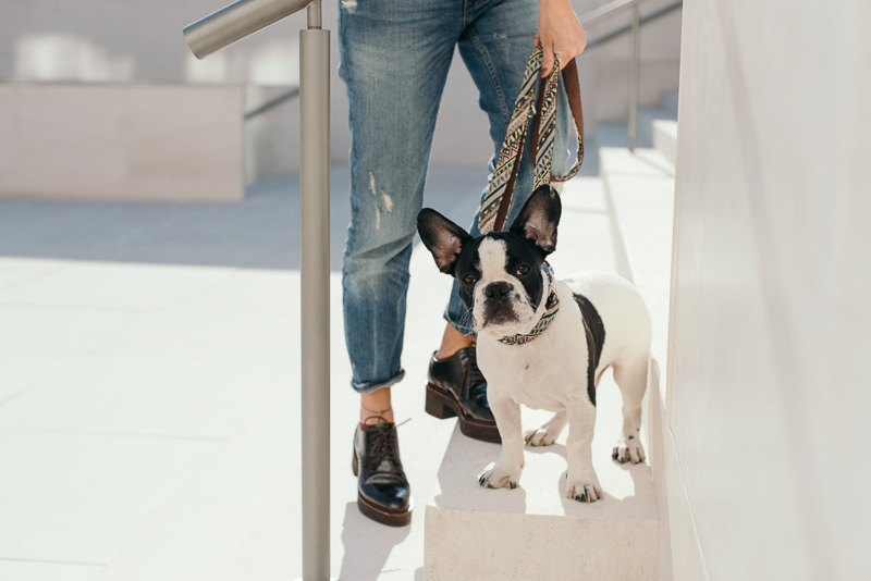 brott-barcelona-charlie-the-dog-french-bulldog-styleinlima-BROTT-FW2015-AmerM