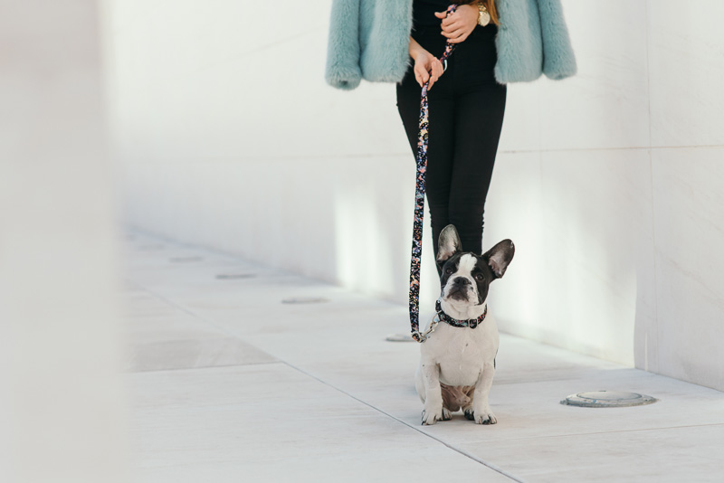 brott-barcelona-charlie-the-dog-french-bulldog-styleinlima-BROTT-FW2015-QuerolM