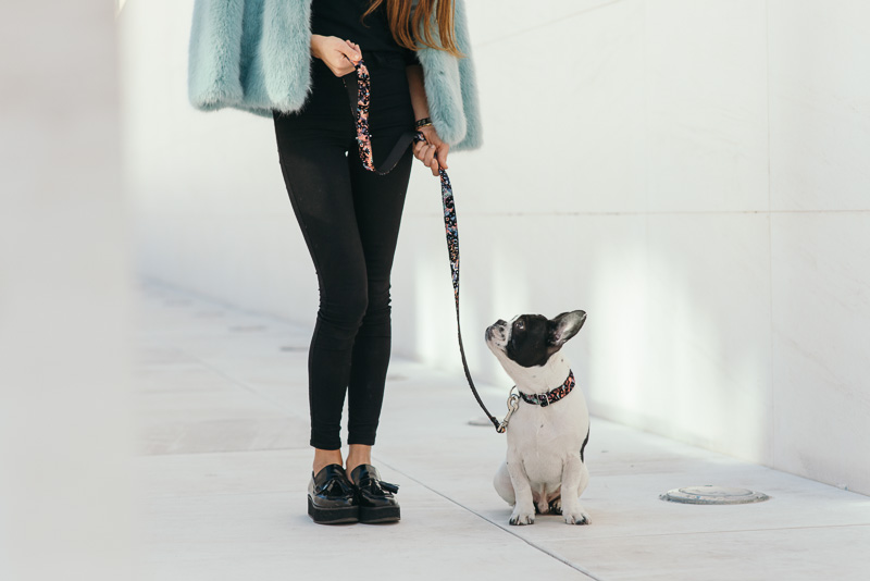 brott-barcelona-charlie-the-dog-french-bulldog-styleinlima-BROTT-FW2015-QuerolM5.jpg